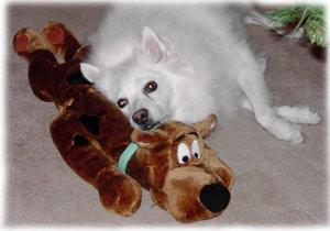 My dog Niko sleeping on his Scooby-Doo